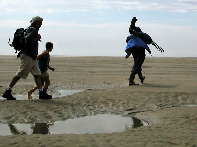 Zeehonden spotten in de Baai van de Somme