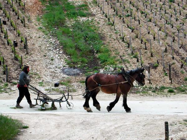 Biologische wijn in Frankrijk