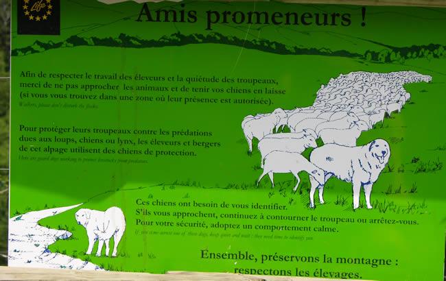 Pyreneese Berghond