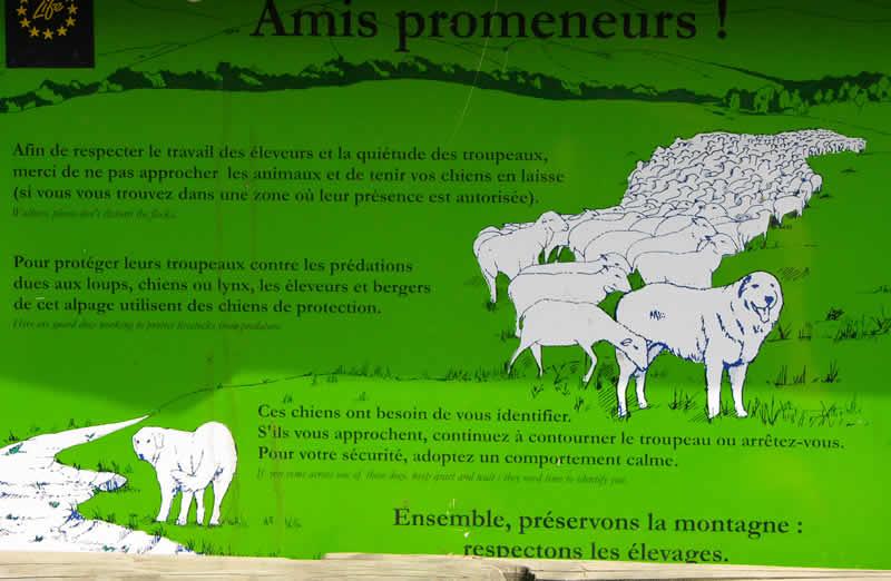Patou, de Pyreneese berghond