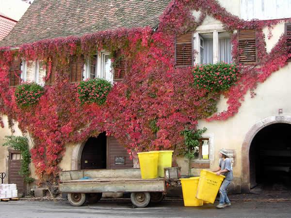 Riquewihr is een mooi dorp in de wijnstreek van de Elzas