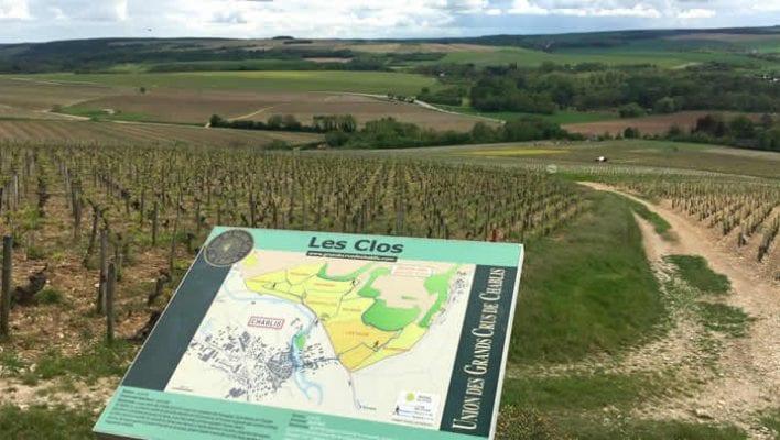 Wijngaarden van Chablis