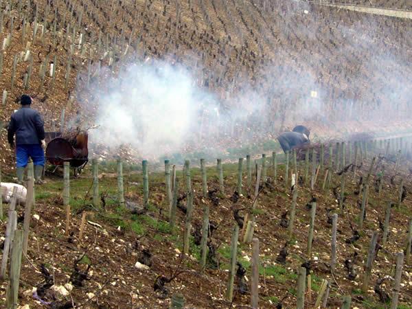 Werk in de wijngaard