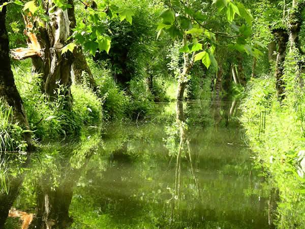 Hoe groen een moeras kan zijn … le Marais Poitevin