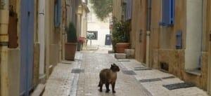 Saint-Tropez is niet voor de poes