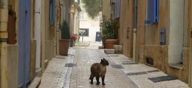 Saint-Tropez is voor de poes!