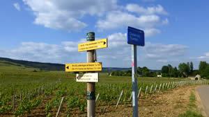 Wandelen in de wijngaarden van Beaune