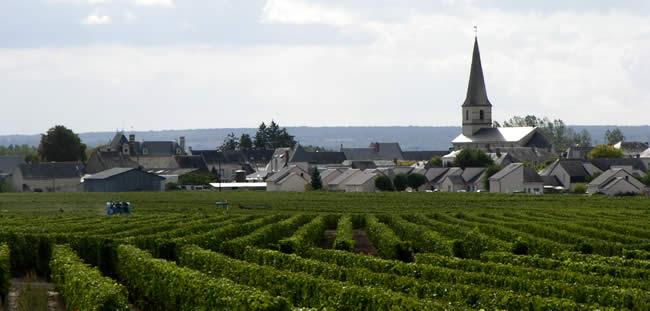De wijngaarden bj Saint-Nicolas-de-Bourgueil