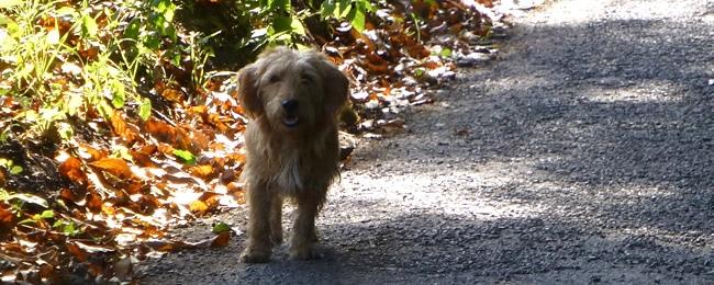Hond in Frankrijk