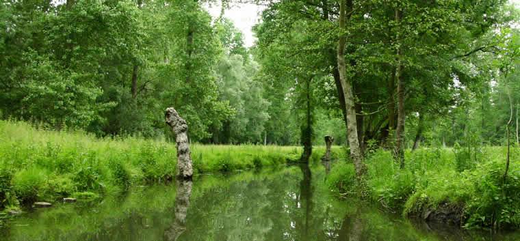 Ontdek het Marais Poitevin