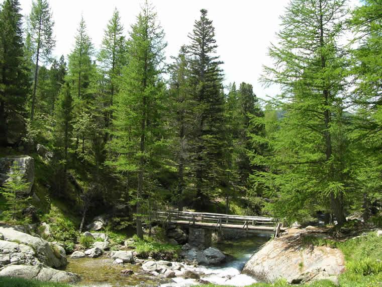 Natuur Route des Grandes Alpes