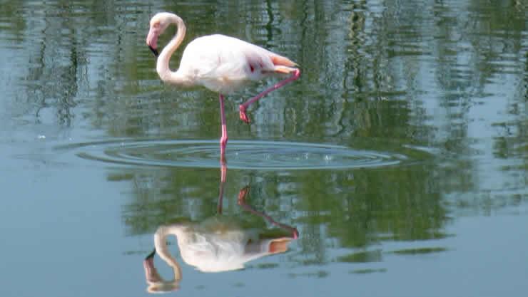 Flamingo's ontdekken