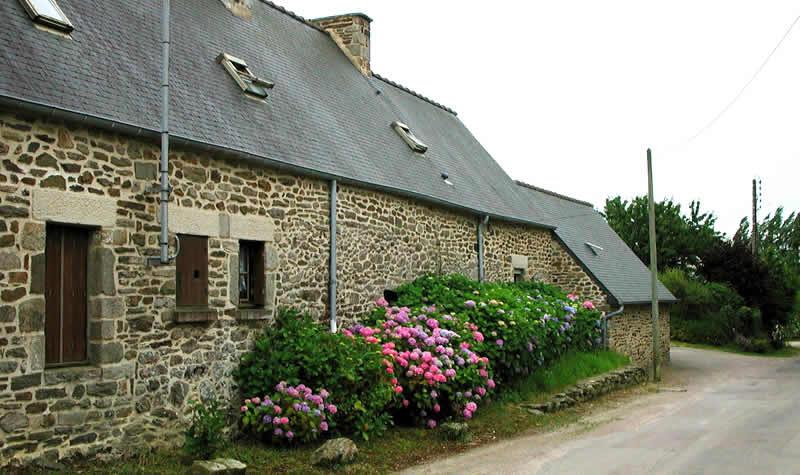 Bloemen in Bretagne