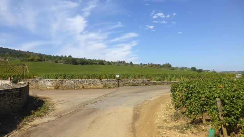 Waar kun je fietsen en wandelen in een Franse wijngaard?
