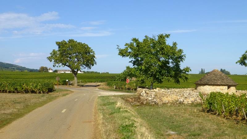 Wijngaarden en fietsen bij Beaune