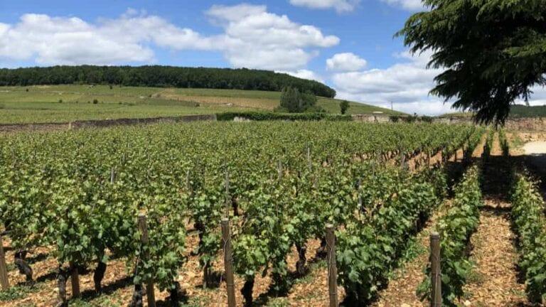 Wijngaarden in de Hérault