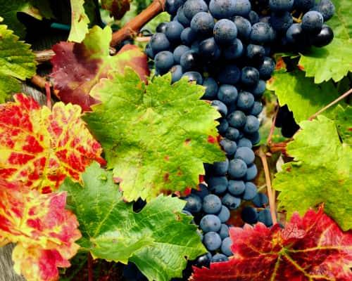 Wijnroadtrip Loirestreek