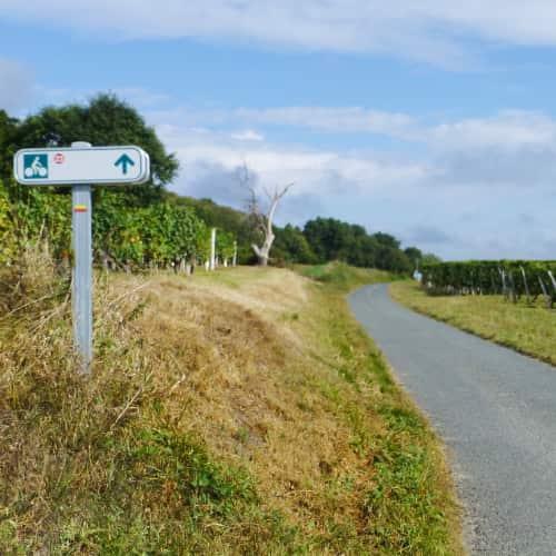 Fietsen in de wijngaarden van Bourgueil
