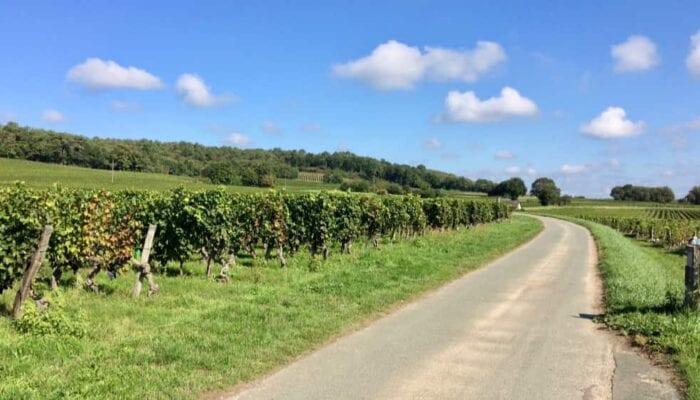 wijngaarden in de omgeving van Bourgueil
