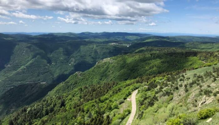 Het bos van Aigoual